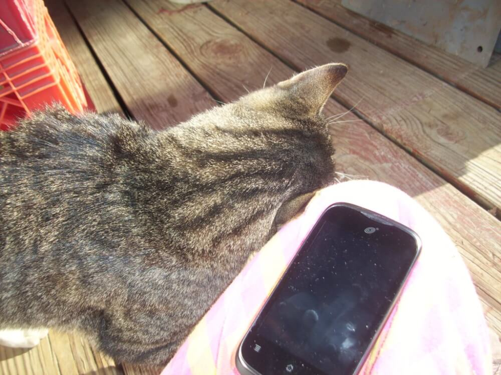 Todd rubbing his right ear against my left knee on an old patio